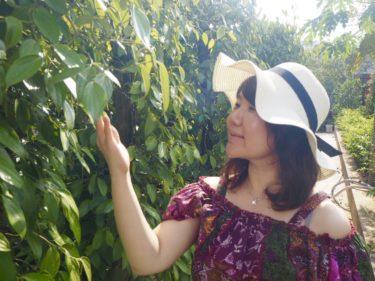 【ベトナムvol.3】フーコック島に来たらぜひ行きたい!ニョクマム工場・胡椒畑とサオビーチ