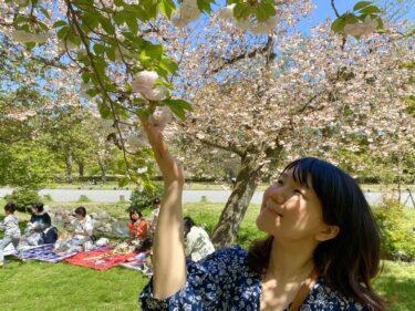 桜咲くWEEK in 京都!娘と一緒にお花見を満喫しました。